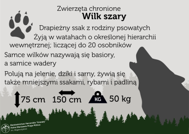 wilkszary